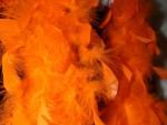 Pájaros Naranjas
