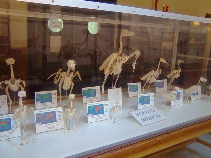 Imágen Museo de Anatomía Comparada de Vertebrados Fotografía 5 ...