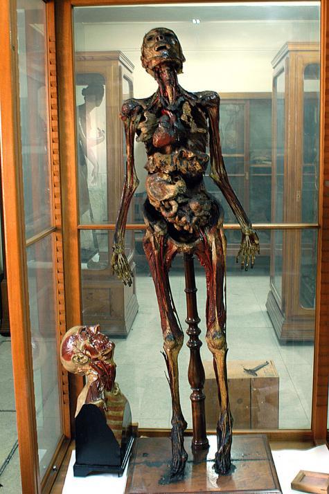 Imágen Museo de Anatomía «Javier Puerta» Fotografía 4 | Campus ...