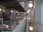 Museo de Anatomía Comparada de Vertebrados Fotografía 4