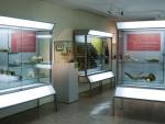 Museo de Antropología Médica y Forense, Paleopatología y Criminalística «Profesor Reverte Coma» Fotografía 1