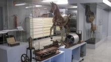 Veterinary Museum Complutense Photo 1