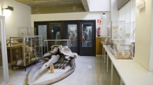 Museum of Comparative Anatomy of Vertebrates Photo 1