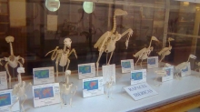 Museum of Comparative Anatomy of Vertebrates Photo 5