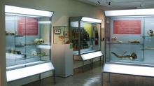 Museum of Medical and Forensic Anthropology, Paleopathology and Forensic «Profesor Reverte Coma» Photo 1