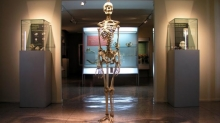 Museum of Medical and Forensic Anthropology, Paleopathology and Forensic «Profesor Reverte Coma» Photo 5